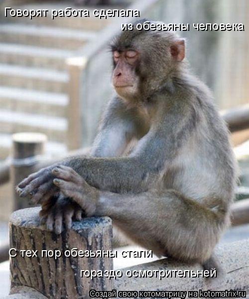 Котоматрица: Говорят работа сделала  из обезьяны человека С тех пор обезьяны стали гораздо осмотрительней