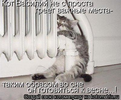 Котоматрица: Кот Василий не с проста греет важные места- таким образом во сне он готовиться к весне...!