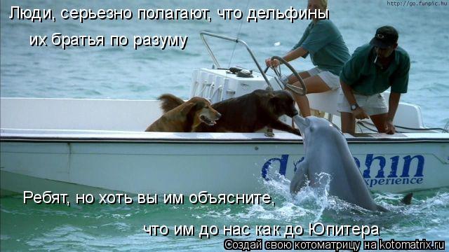 Котоматрица: Люди, серьезно полагают, что дельфины  их братья по разуму Ребят, но хоть вы им объясните,  что им до нас как до Юпитера