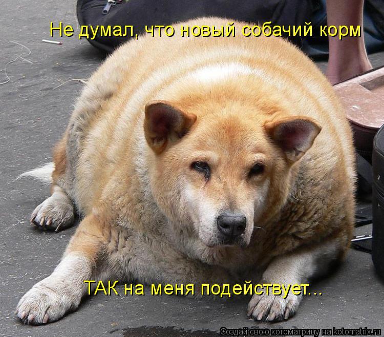 Котоматрица: Не думал, что новый собачий корм  ТАК на меня подействует...