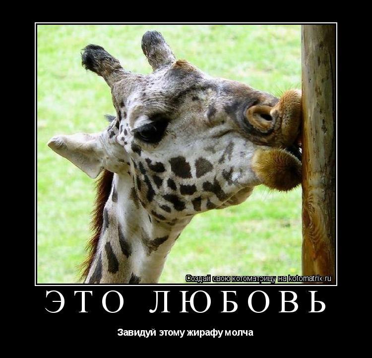 Котоматрица: Это любовь Завидуй этому жирафу молча