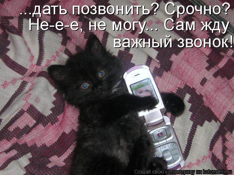 Котоматрица: ...дать позвонить? Срочно? Не-е-е, не могу... Сам жду важный звонок! Не-е-е, не могу... Сам жду важный звонок!  важный звонок!