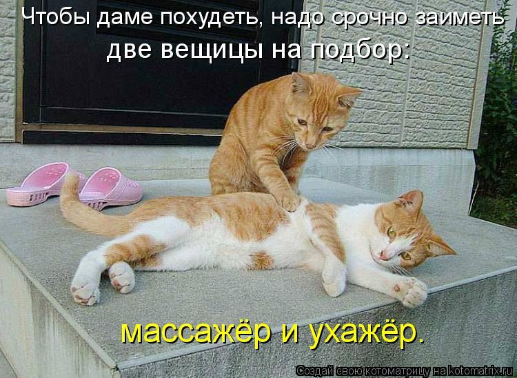 Котоматрица: Чтобы даме похудеть, надо срочно заиметь две вещицы на подбор:  массажёр и ухажёр.