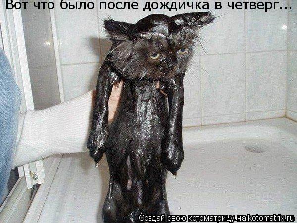 Котоматрица: Вот что было после дождичка в четверг...