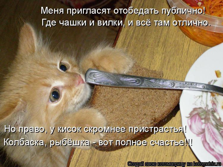 Котоматрица: Меня пригласят отобедать публично! Где чашки и вилки, и всё там отлично. Но право, у кисок скромнее пристрастья! Колбаска, рыбёшка - вот полно
