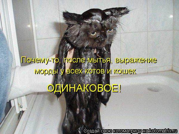 Котоматрица: Почему-то, после мытья, выражение  морды у всех котов и кошек ОДИНАКОВОЕ!