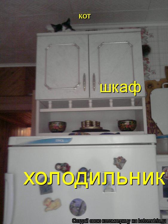 Котоматрица: холодильник шкаф кот