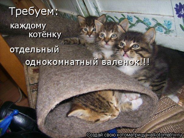Котоматрица: Требуем: каждому котёнку отдельный  однокомнатный валенок!!!