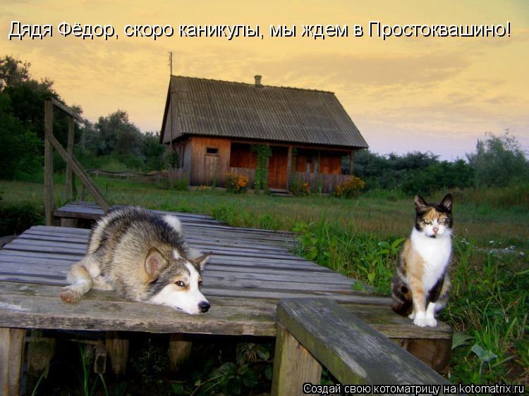 Котоматрица: Дядя Фёдор, скоро каникулы, мы ждем в Простоквашино!