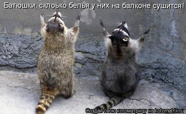 Котоматрица: Батюшки, склоько белья у них на балконе сушится!