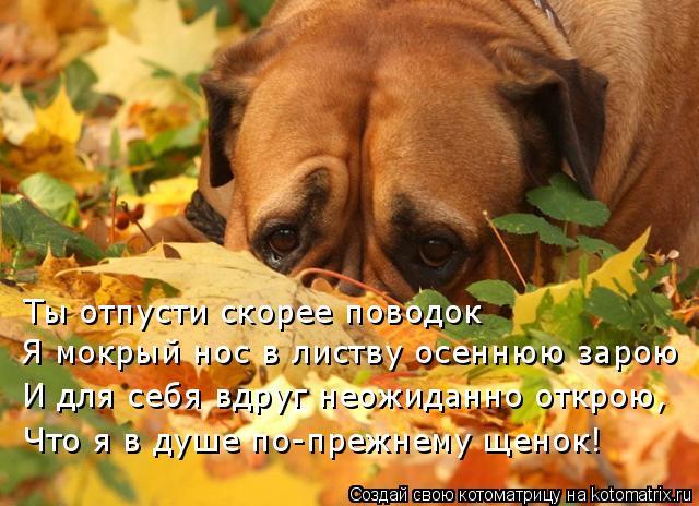 Котоматрица: Ты отпусти скорее поводок Я мокрый нос в листву осеннюю зарою И для себя вдруг неожиданно открою, Что я в душе по-прежнему щенок!
