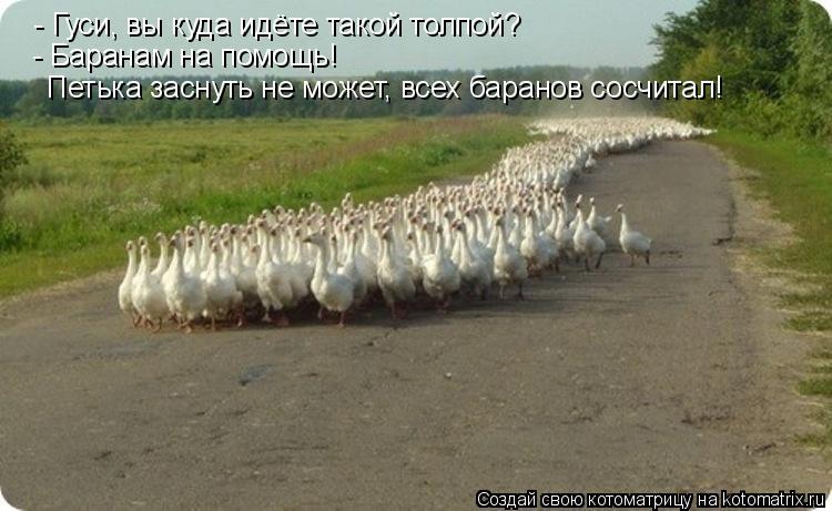 Котоматрица: - Гуси, вы куда идёте такой толпой? - Баранам на помощь!  Петька заснуть не может, всех баранов сосчитал!
