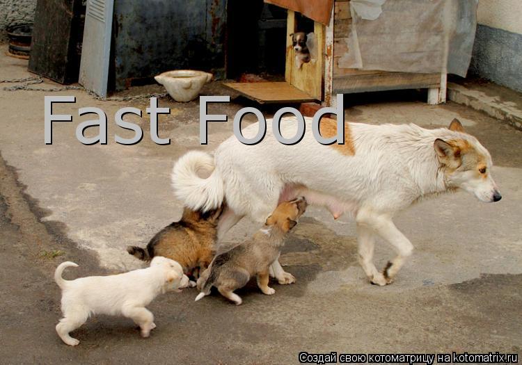 Котоматрица: Fast Food