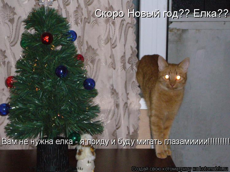 Котоматрица: Скоро Новый год?? Елка??   Вам не нужна елка - я приду и буду мигать глазамииии!!!!!!!!!!!!