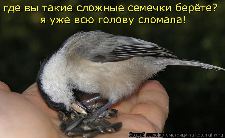 Котоматрица: я уже всю голову сломала! где вы такие сложные семечки берёте?
