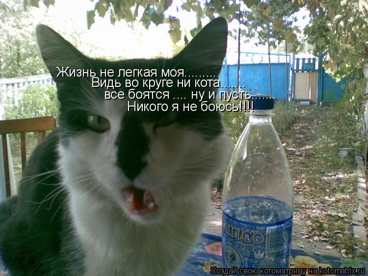 Котоматрица: Жизнь не легкая моя......... Видь во круге ни кота....... все боятся .... ну и пусть....... Никого я не боюсь!!!!