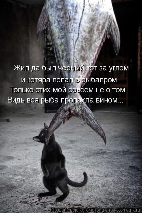 Котоматрица: Жил да был черный кот за углом и котяра попал в рыбапром Только стих мой совсем не о том Видь вся рыба пропахла вином...