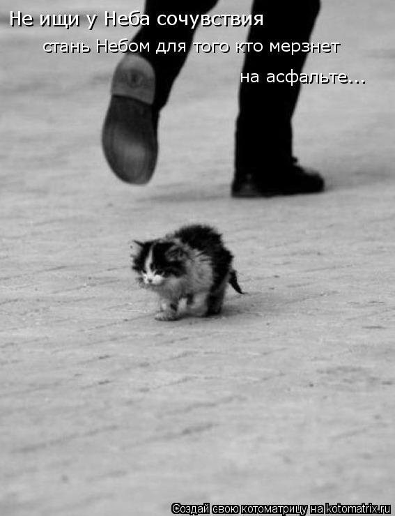 Котоматрица: Не ищи у Неба сочувствия стань Небом для того кто мерзнет на асфальте...