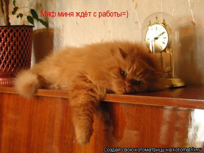Котоматрица: Мяф миня ждёт с работы=)