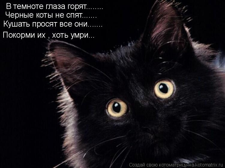 Котоматрица: В темноте глаза горят........ Черные коты не спят....... Кушать просят все они....... Покорми их , хоть умри...