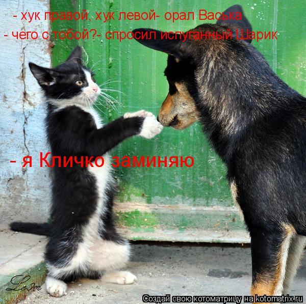 Котоматрица: - хук правой, хук левой- орал Васька - чего с тобой?- спросил испуганный Шарик - я Кличко заминяю