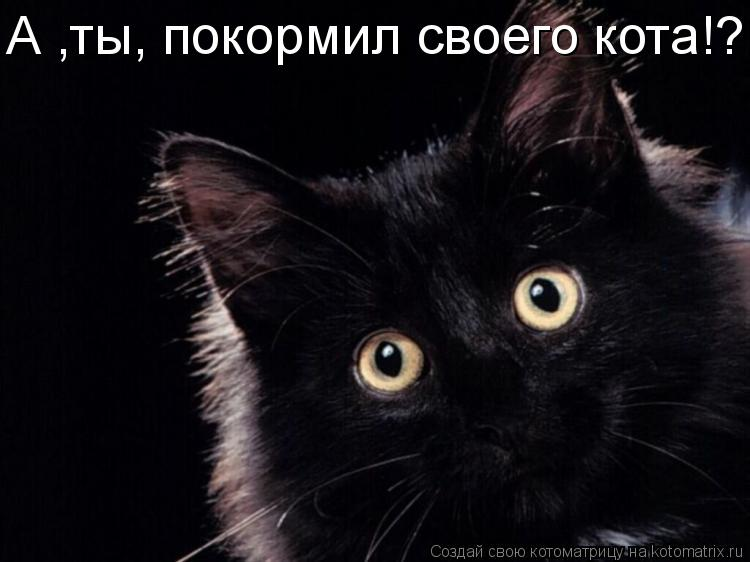 Котоматрица: А ,ты, покормил своего кота!?