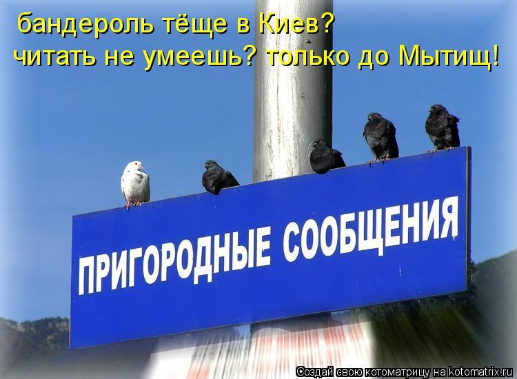 Котоматрица: бандероль тёще в Киев? читать не умеешь? только до Мытищ!