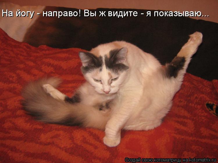 Котоматрица: На йогу - направо! Вы ж видите - я показываю...
