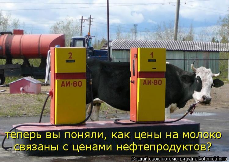 Котоматрица: теперь вы поняли, как цены на молоко связаны с ценами нефтепродуктов?