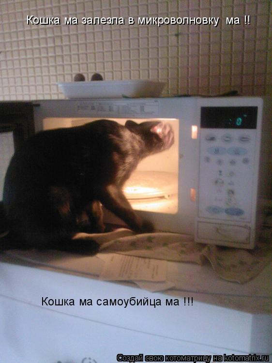 Котоматрица: Кошка ма залезла в микроволновку  ма !! Кошка ма самоубийца ма !!!
