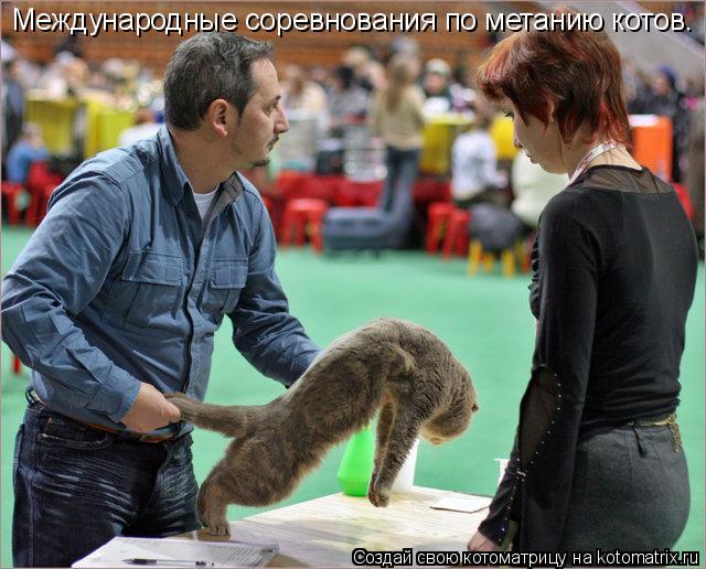Котоматрица: Международные соревнования по метанию котов.