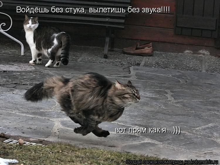 Котоматрица: Войдёшь без стука, вылетишь без звука!!!! вот прям как я...)))