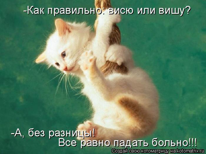 Котоматрица: -Как правильно: висю или вишу? -А, без разницы! Все равно падать больно!!!