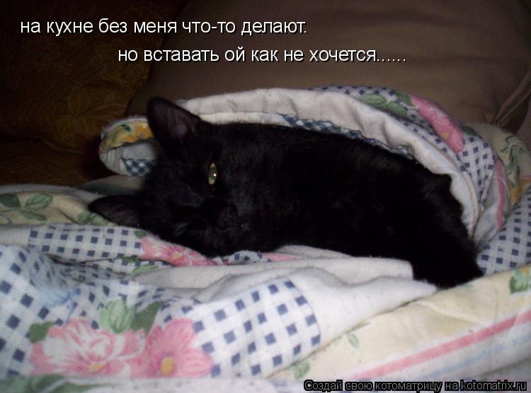 Котоматрица: на кухне без меня что-то делают. но вставать ой как не хочется......