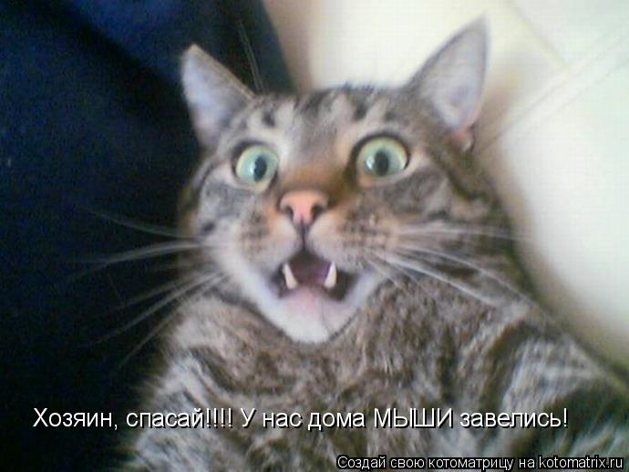 Котоматрица: Хозяин, спасай!!!! У нас дома МЫШИ завелись!