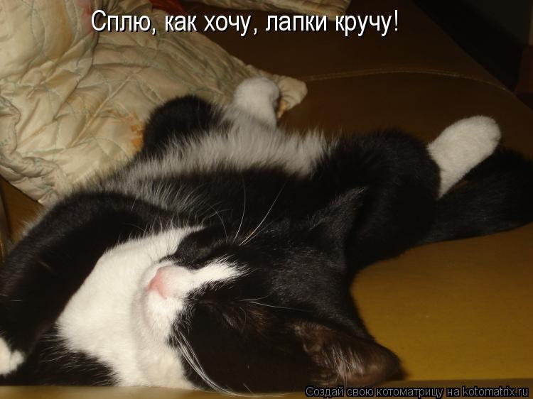 Котоматрица: Сплю, как хочу, лапки кручу!