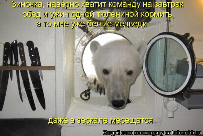 Котоматрица: обед и ужин одной тюлениной кормить, а то мне уже белые медведи даже в зеркале мерещатся Зиночка, наверно хватит команду на завтрак