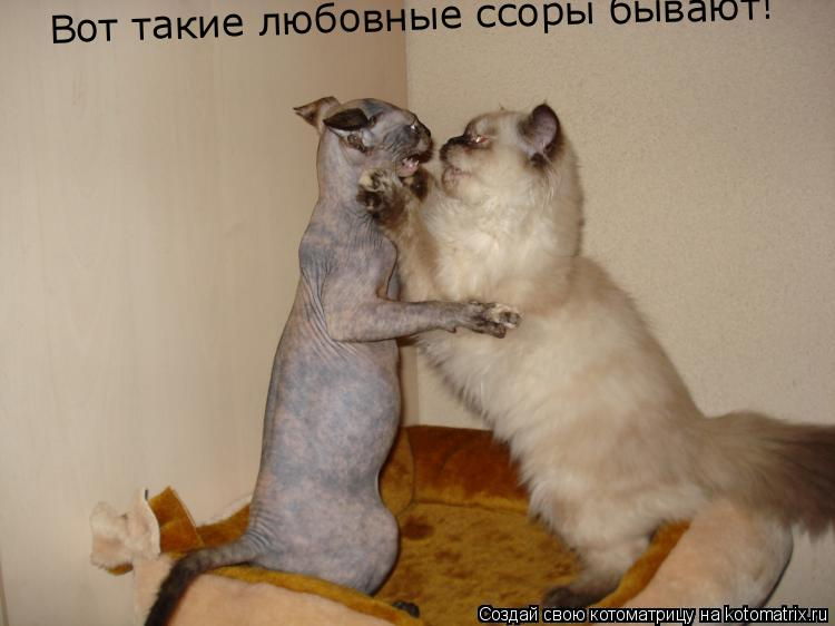 Котоматрица: Вот такие любовные ссоры бывают!