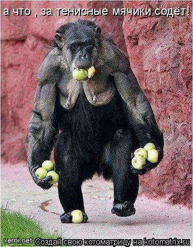 Котоматрица: а что , за тенисные мячики содёт!