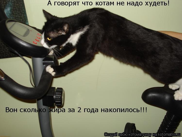 Котоматрица: А говорят что котам не надо худеть!  Вон сколько жира за 2 года накопилось!!!