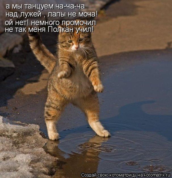 Котоматрица: а мы танцуем ча-ча-ча над лужей , лапы не моча! ой нет! немного промочил не так меня Полкан учил!