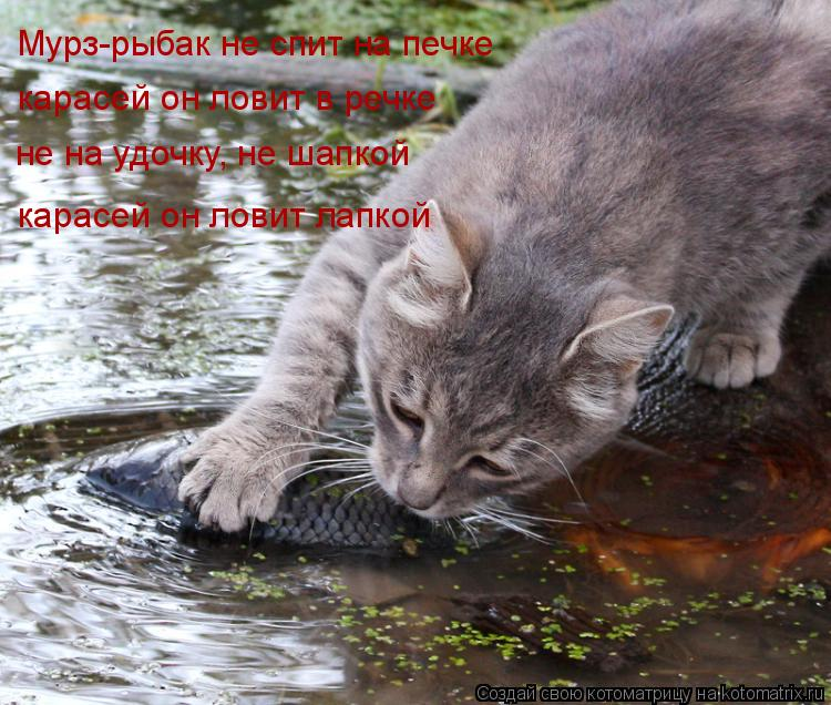 Котоматрица: Мурз-рыбак не спит на печке карасей он ловит в речке не на удочку, не шапкой карасей он ловит лапкой