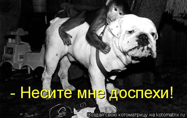 Котоматрица: - Несите мне доспехи!