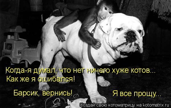 Котоматрица: Я все прощу... Барсик, вернись! Когда-я думал, что нет ничего хуже котов... Как же я ошибался!