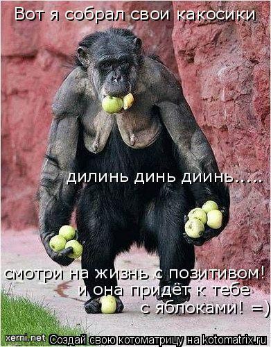 Котоматрица: Вот я собрал свои какосики  дилинь динь диинь..... смотри на жизнь с позитивом! =) и она придёт к тебе с яблоками! =)