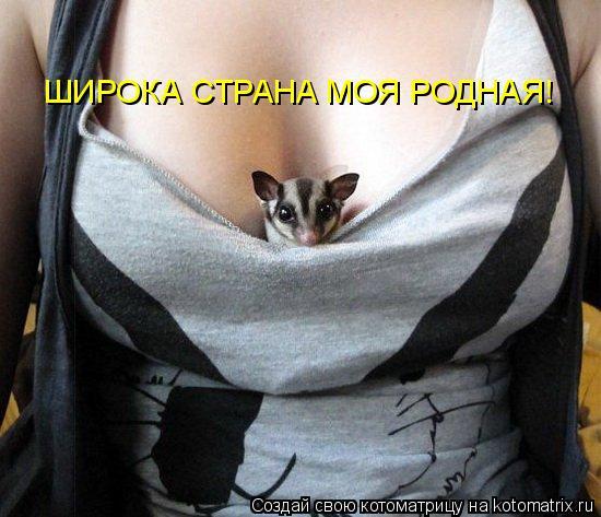Котоматрица: ШИРОКА СТРАНА МОЯ РОДНАЯ!