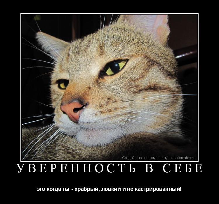 Котоматрица: УВЕРЕННОСТЬ В СЕБЕ это когда ты - храбрый, ловкий и не кастрированный!