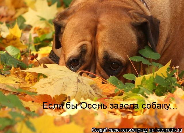 Котоматрица: Если бы Осень завела собаку...