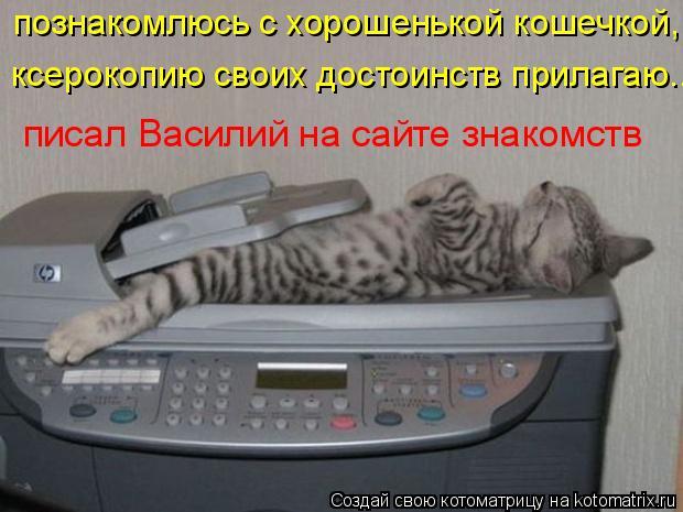 Котоматрица: познакомлюсь с хорошенькой кошечкой, ксерокопию своих достоинств прилагаю... писал Василий на сайте знакомств
