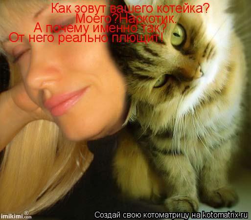 Котоматрица: Как зовут вашего котейка? Моего?Наркотик. А почему именно так? От него реально плющит!